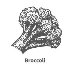 Hand-drawn broccoli vector
