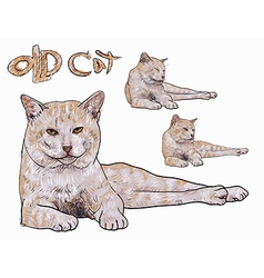 Old yellow cat vector image