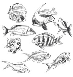 reef fishes set vector image