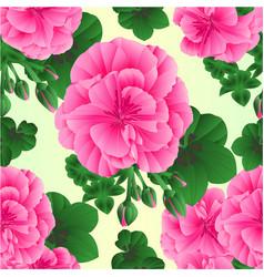 seamless texture pelargonium geranium pink vector image