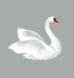 white bird isolated over white background swans vector image