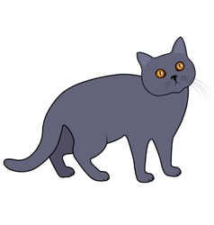 Gray cat vector