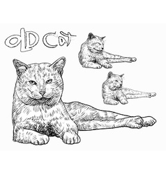 Old cat vector image vector image