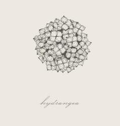Hand-drawn hydrangea in vector
