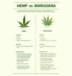 Hemp vs marijuana vertical infographic vector