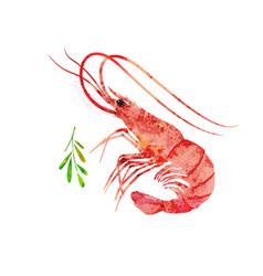 Red prawn shrimp watercolor seafood vector