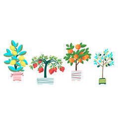 Set potted plants pomegranate olive tree vector