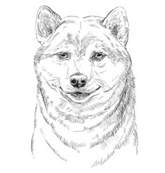 shiba inu portrait vector image