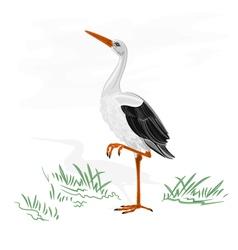 Stork white wild water bird vector