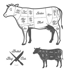 British butcher cuts of beef diagram vector