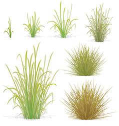 Various tufts grass elements vector