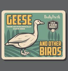 Goose birds from farm retro poster vector