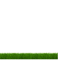 green grass frame white background vector image