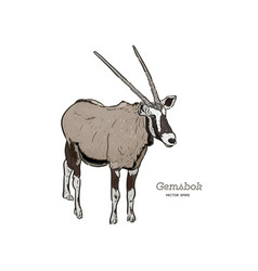 Standing gemsbok with two horns hand draw vector