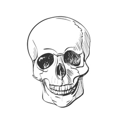 doodle skull vector image vector image