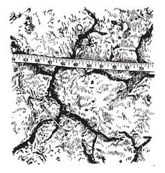 Cracks in soil vintage vector