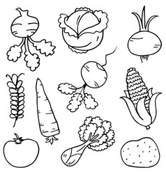Doodle of vegetables hand draw on white vector