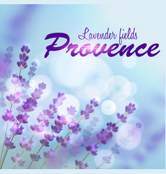 Lavender background provence fields vector
