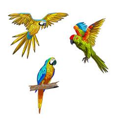 Set parrots flying vector