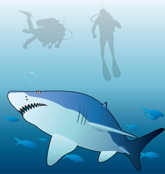 shark and scuba divers vector image