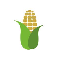 corn farm fresh vector image