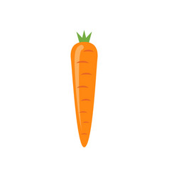 carrot icon isolated carrot vector image