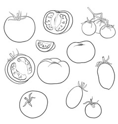 Drawing tomatoes vector