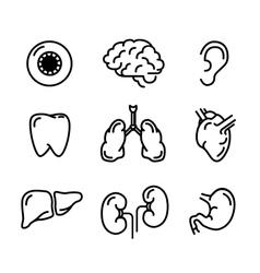 set black outline icons humans organs on vector image