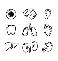 Set of black outline icons of humans organs on vector