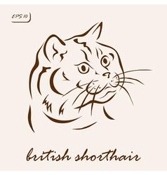 British shorthair vector