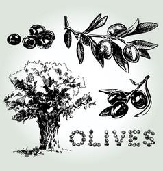 olives set sketch vector image
