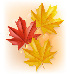 Autumn leaves realistic isolated fall vector