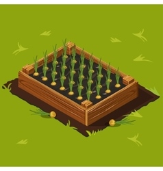 Vegetable Garden Box with Onions Set 11 vector image