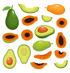 bright set of fresh papaya avocado vector image