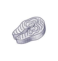 drawing salmon steak vector image