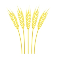Ears of Wheat icon vector image