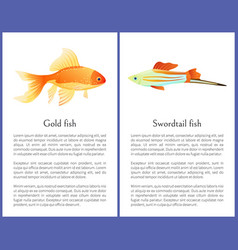 goldfish and swordtail fish isolated on white vector image