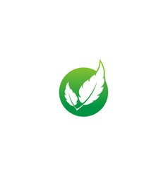 green leaf nature organic design logo vector image