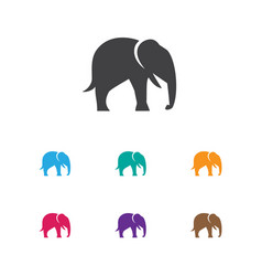 of zoo symbol on elephant icon vector image