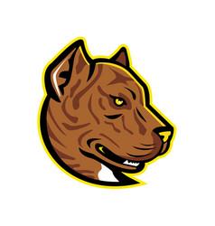 spanish bulldog or alano mascot vector image