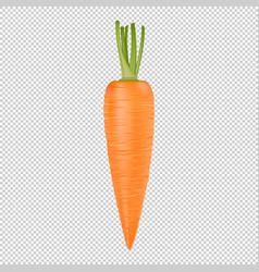 isolated realistic carrot icon design vector image vector image