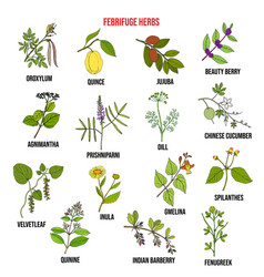 febrifuge herbs collection hand drawn set vector image