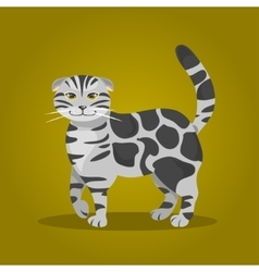 Scottish Fold cat vector image