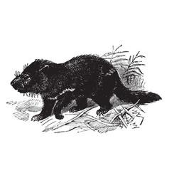 tasmanian devil vintage vector image