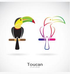 Toucan bird design on white background wild vector