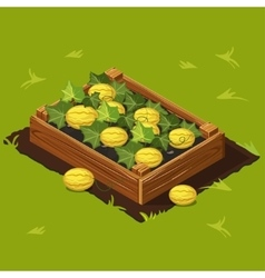 Vegetable Garden Box with Melons Set 6 vector