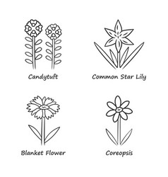 Wild flowers linear icons set candytuft common vector