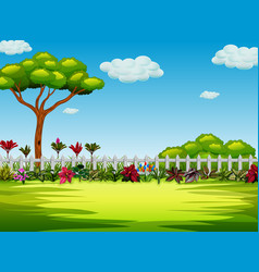 beautiful yard with the tree and bush vector image