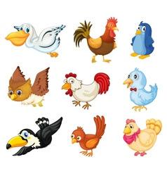 collection birds vector image