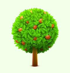 cute orange or mandarin tree with green leaves and vector image vector image